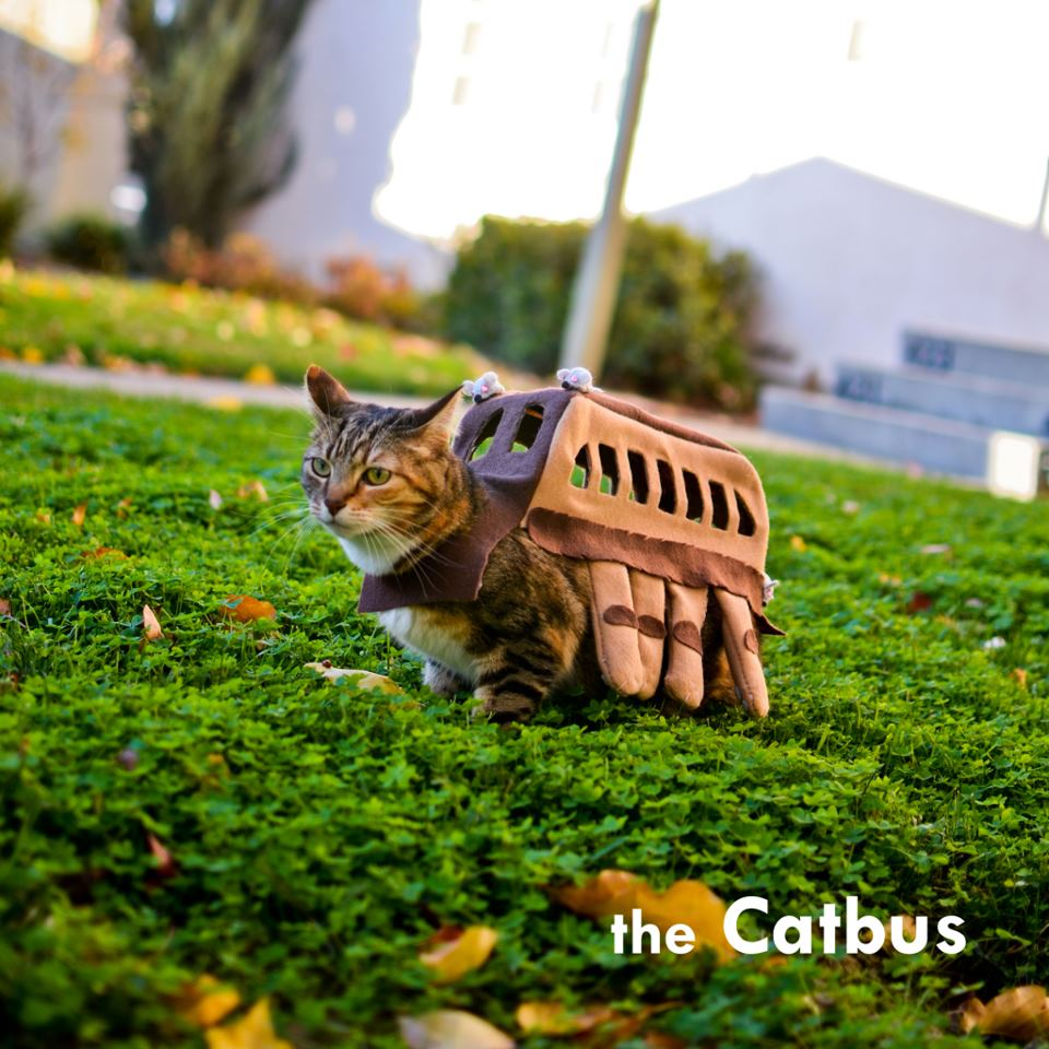 How to make a Catbus Cosplay from Totoro