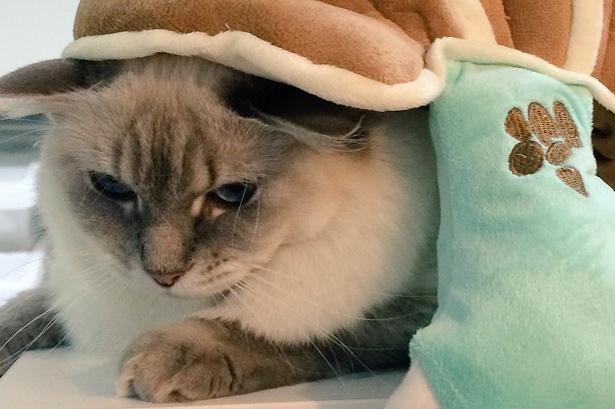The Otaku House Cat Starts Cosplaying
