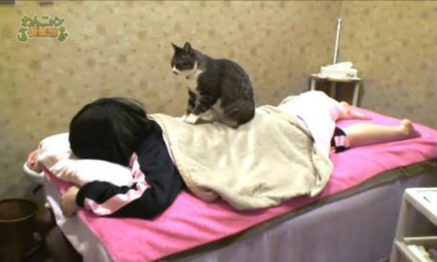 Cat Massage – Only in Japan!